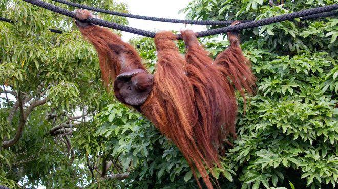 Grey Lynn News - Auckland Zoo South East Asia Jungle Track