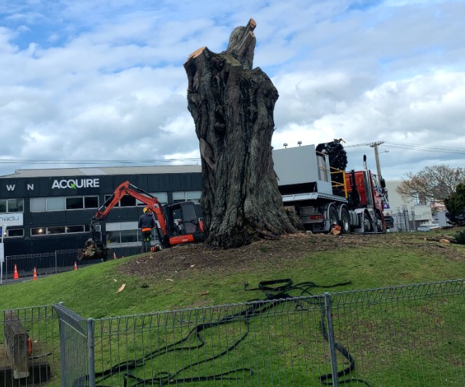 Grey Lynn News - Army tree