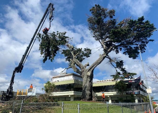 Grey Lynn News - Army tree
